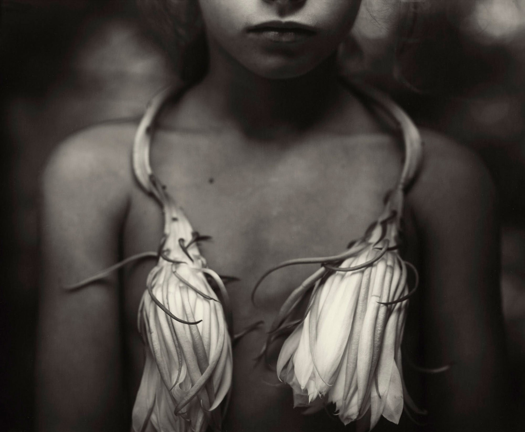 Sally Mann - Night-blooming Cereus, 1988
